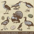 Vintage birds illustrations. Vector set - Stock Vector