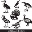 Vintage birds illustrations. Vector set — Stock Vector