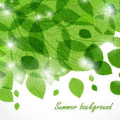 Summer background with green leaves — Stock Vector