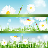 Summer banners with daisy and ladybugs in green grass — Stock Vector