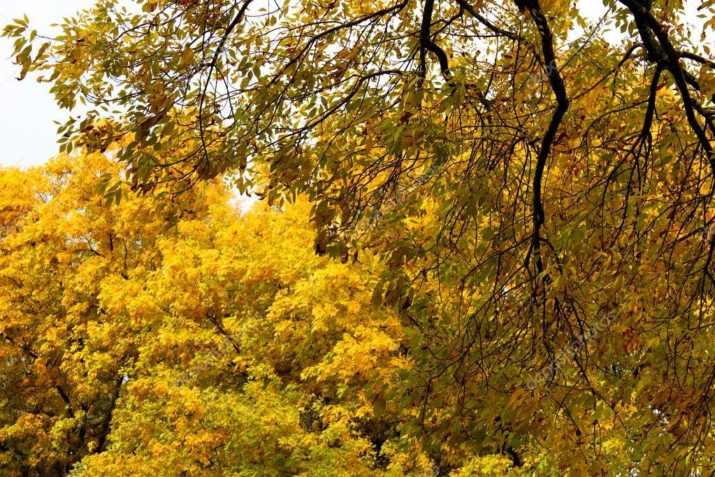 秋天的树木 - 图库图片