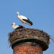 Two white storks in a nest on top of chimney — Stock Photo