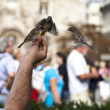 Feeding the birds — Stock Photo