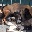 Puppies and mother - Photo