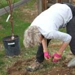 Female gardener. — Stock Photo #10161542