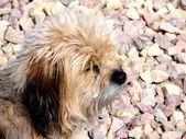 Cachorro. — Foto de Stock