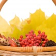 Autumn leaves and fruits isolated — 图库照片