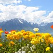 Flowers against mountains and lake Geneva from the Embankment in Montreux. Switzerland — Foto de Stock