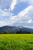 Campo de flores Alpes em fundo de montanhas — Fotografia Stock