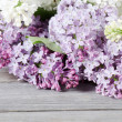 Beautiful lilac — Stock Photo #8259058