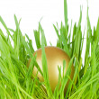 Gold egg in a green grass - Stock Photo