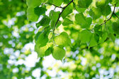 Spring leaves on a tree branch — Stockfoto