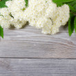 Mountain ash flower — 图库照片 #8683181