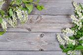 Bird cherry branch on wooden surface — Stock Photo