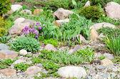 Fiori bella primavera — Foto Stock