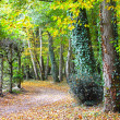 Nice park in autumn — Stock Photo