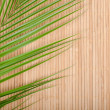 Background from a bamboo rug and palm tree leaf - Stock Photo