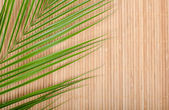 Background from a bamboo rug and palm tree leaf — Stock Photo