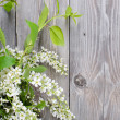 Bird cherry branch on wooden surface - Stok fotoğraf