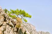 Prachtig uitzicht mounttain groen canyon — Stockfoto