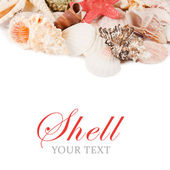 Sea shell isolated on a white — Stock Photo