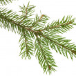 Fir branch — Stock Photo #8023407