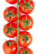Tomatoes - Stockfoto