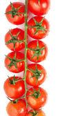 Tomatoes — Stock fotografie