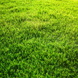 Grass background — Stockfoto