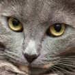 Cat's face - Stockfoto