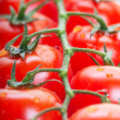 tomatoes — Stock Photo #9206948