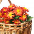 Chrysanthemum in a basket — Stock Photo #9449245