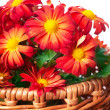 Chrysanthemum in a basket — Stock Photo #9579011
