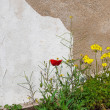 Wildflowers near the whitewashed walls. Background. — Stock Photo