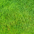 Natural green grass field — Stock Photo