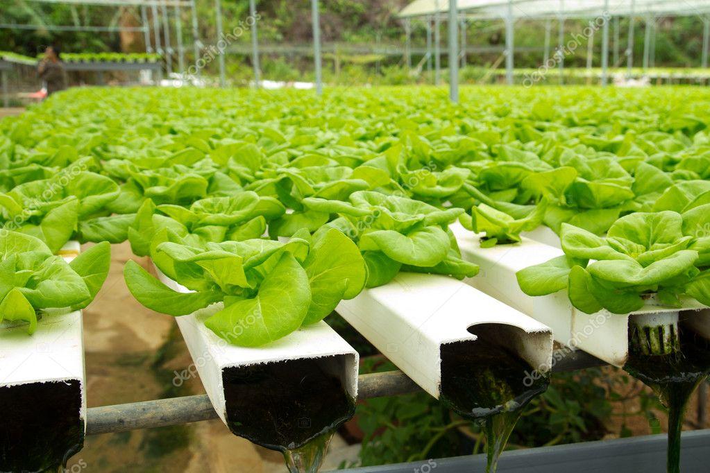 Internet of food: Arduino-based, urban aquaponics in