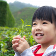 Little child at tea plantation — Stock Photo