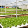 Stock Photo: Hydroponic green house
