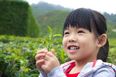 Little child at tea plantation — Foto de Stock