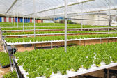 Hydroponic green house — Stock Photo