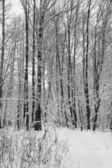 Winter forest. — Stock Photo