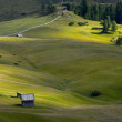 Stock Photo: Alpine Field