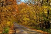 Autumn Road — Foto Stock