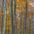 Autumn Forest — Stock fotografie #9119095