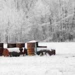 Barrels — Stock Photo #9119155