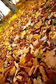 Jesień — Zdjęcie stockowe