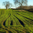 Agricultural Field — Stock Photo #9211521