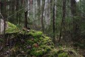 Verde musgo — Foto de Stock