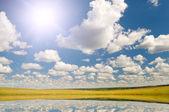 夏の草原 — ストック写真