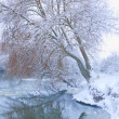 Tree on the bank of the river in snowfall — Stock Photo